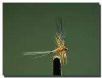 Ephemerella ignita (subimago femmina)