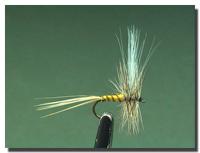 Epeorus assimilis