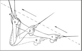 linearita-1