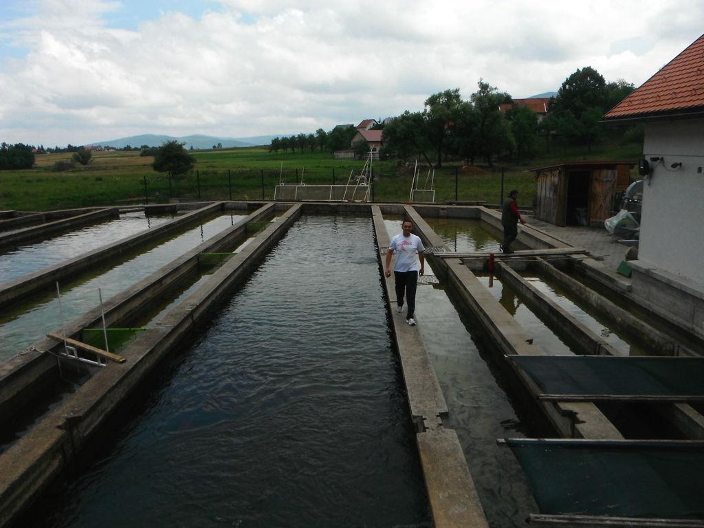 Gacka 2013 7 anni dopo scuola italiana di pesca a mosca for Vasche per allevamento trote