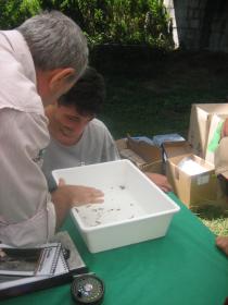 ricerca insetti